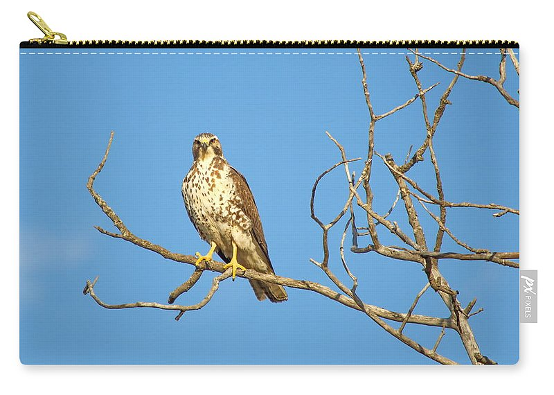 Nature Carry-all Pouch featuring the photograph Perched Poser by Crystal Massop