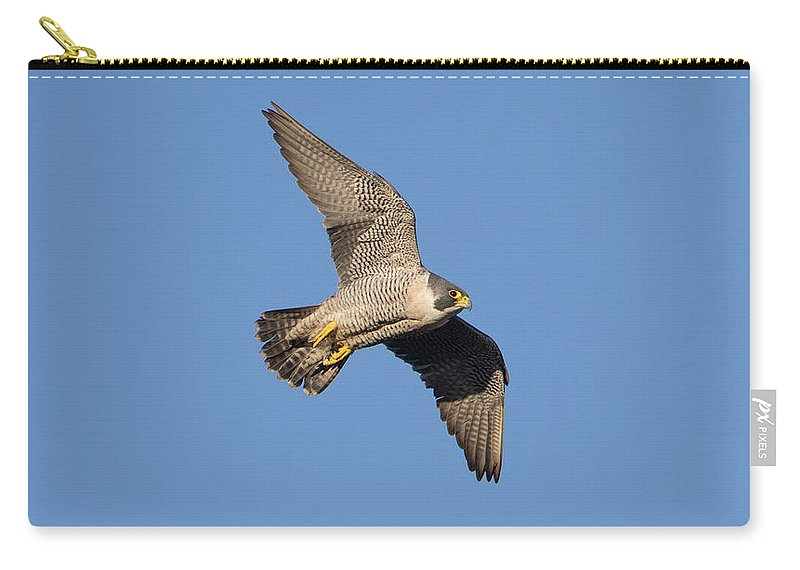 Peregrine Carry-all Pouch featuring the photograph Peregrine Falcon by Peter Walkden