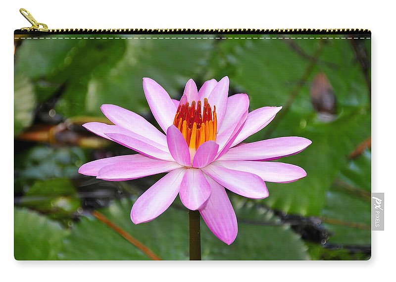 Flower Carry-all Pouch featuring the photograph Perfectly Pink by David Lee Thompson