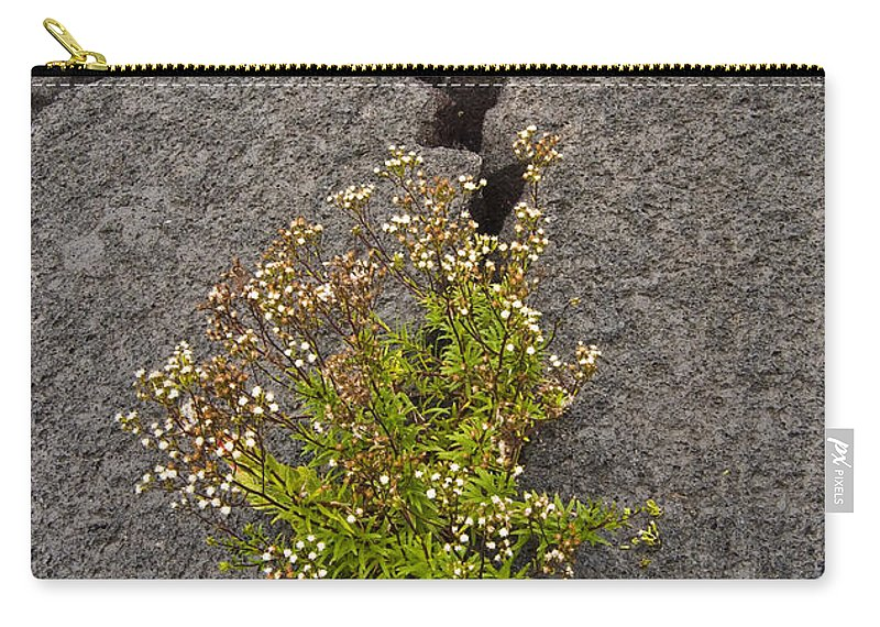 Persistent Carry-all Pouch featuring the photograph Persistent Flora by Robert Ponzoni