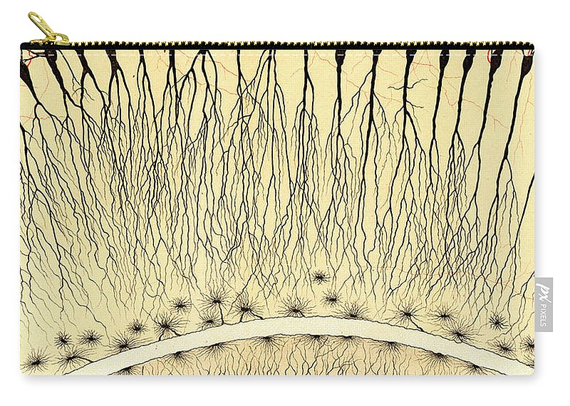 History Carry-all Pouch featuring the photograph Pes Hipocampi Major Santiago Ramon Y Cajal by Science Source