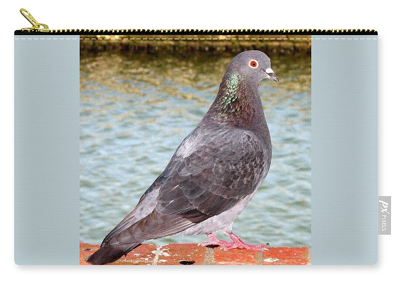 Pigeon Carry-all Pouch featuring the photograph Pigeon by J M Farris Photography