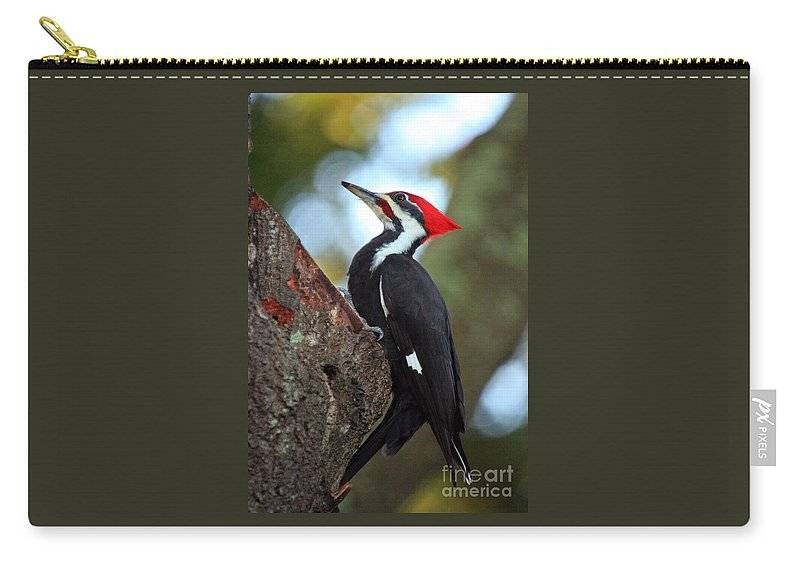 Woodpecker Carry-all Pouch featuring the photograph Pilated Woodpecker by Randy Matthews