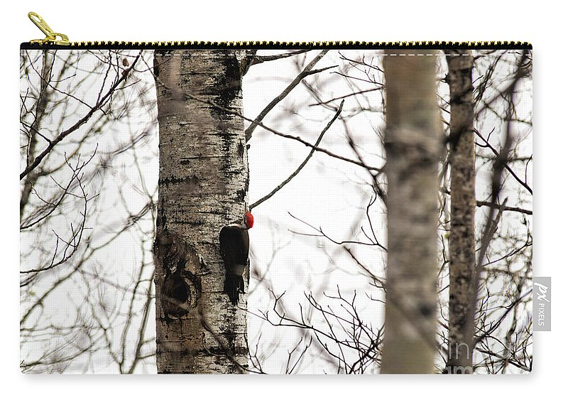 Pileated Woodpecker Carry-all Pouch featuring the photograph Pileated by William Tasker
