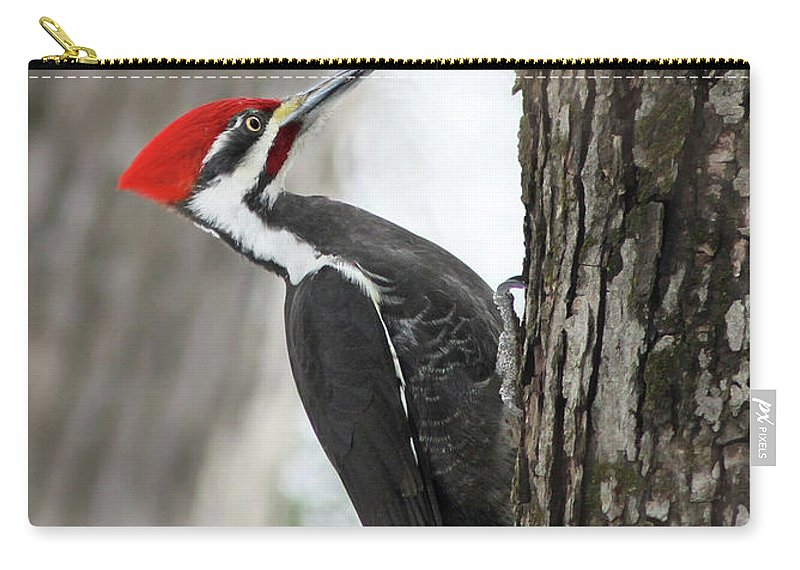 Carry-all Pouch featuring the photograph Pileated Woodpecker In Spring by Mircea Costina Photography
