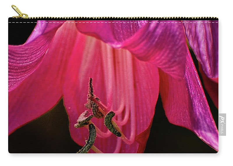 Flower Carry-all Pouch featuring the photograph Pink Aglow by Christopher Holmes