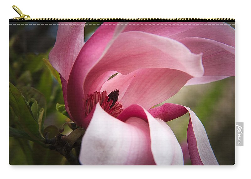 Morton Arboretum Carry-all Pouch featuring the photograph Pink And White Magnolia by Joni Eskridge