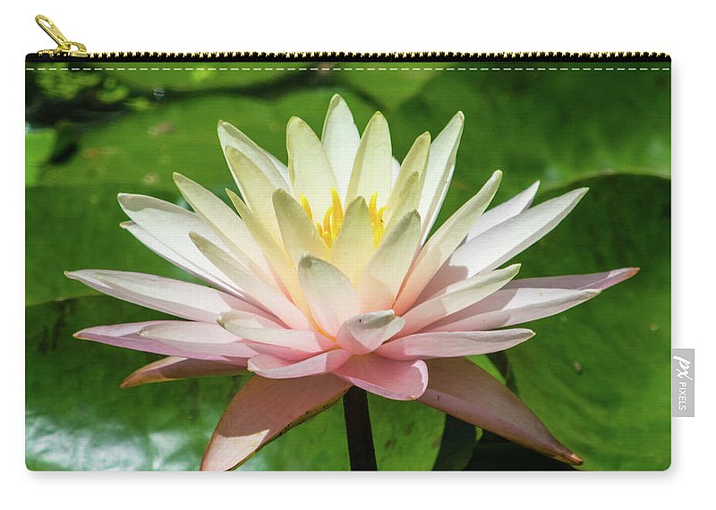 Water Carry-all Pouch featuring the photograph Pink And White Water Lily by Robert Edgar