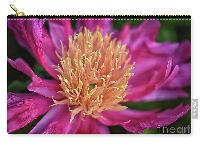 Peony Carry-all Pouch featuring the photograph Pink And Yellow Peony by Lois Bryan