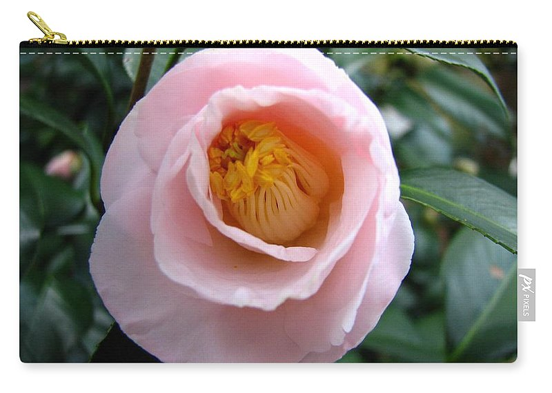 Camellia Carry-all Pouch featuring the photograph Pink Camellia by J M Farris Photography