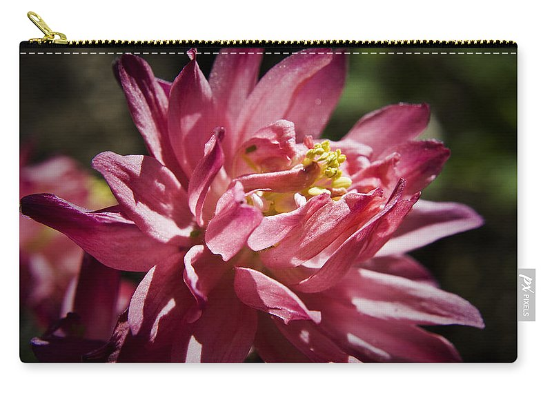Columbine Carry-all Pouch featuring the photograph Pink Columbine by Teresa Mucha