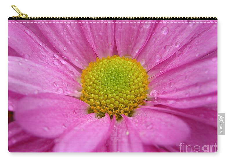 Pink Daisy Carry-all Pouch featuring the photograph Pink Daisy With Raindrops by Carol Groenen