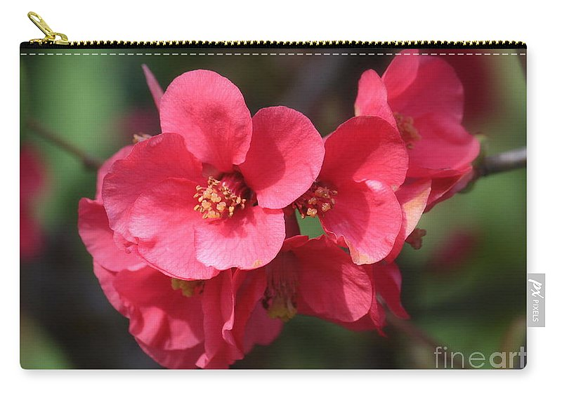 Chaenomeles Carry-all Pouch featuring the photograph Pink Flowering Quince by Carol Groenen