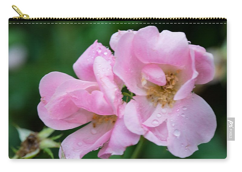 Cedar Park Texas Carry-all Pouch featuring the photograph Pink Knockout Rose After The Rain by JG Thompson