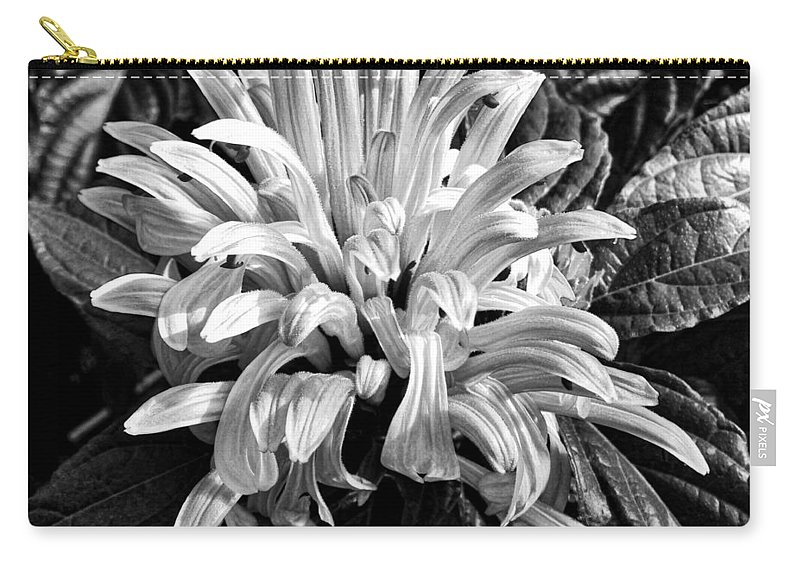 Agave Phillipsiana Carry-all Pouch featuring the photograph Humble by Gordon Bailey
