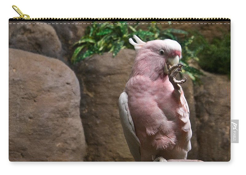 Pink Carry-all Pouch featuring the photograph Pink Parrot Nibbling Foot by Douglas Barnett