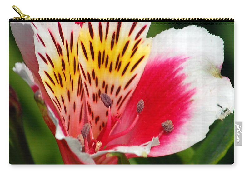 Peruvian Carry-all Pouch featuring the photograph Pink Peruvian Lily 1 by Amy Fose