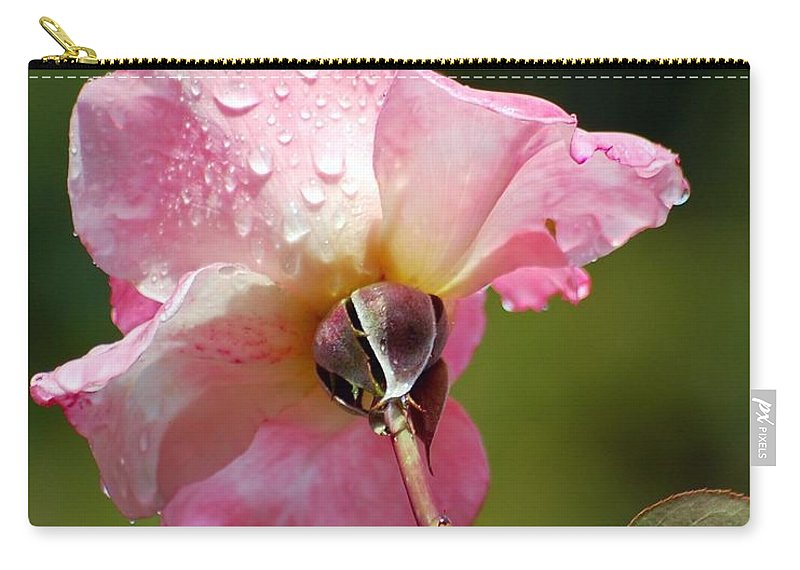 Rose Carry-all Pouch featuring the photograph Pink Rose In The Rain 2 by Amy Fose