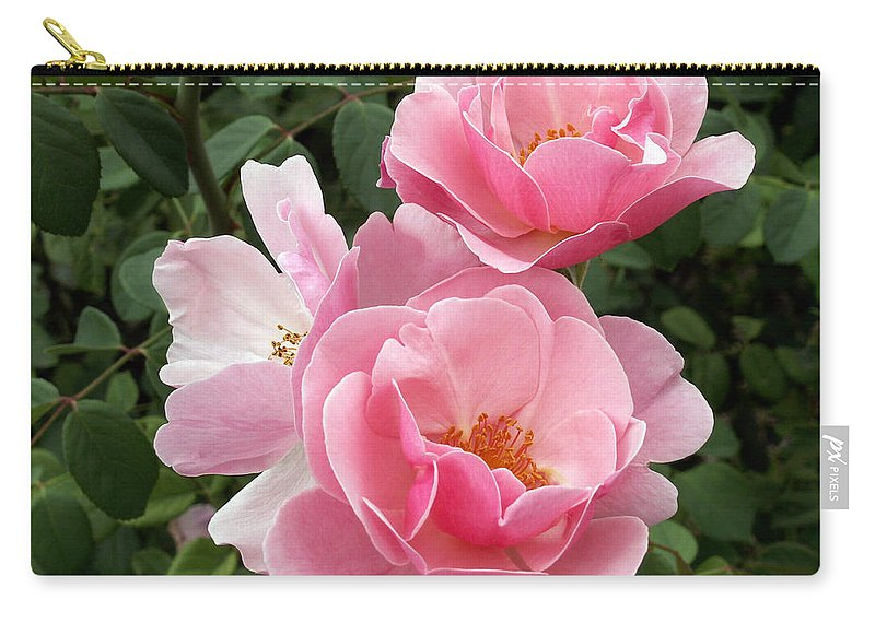 Pink Roses Carry-all Pouch featuring the photograph Pink Roses 2 by Amy Fose