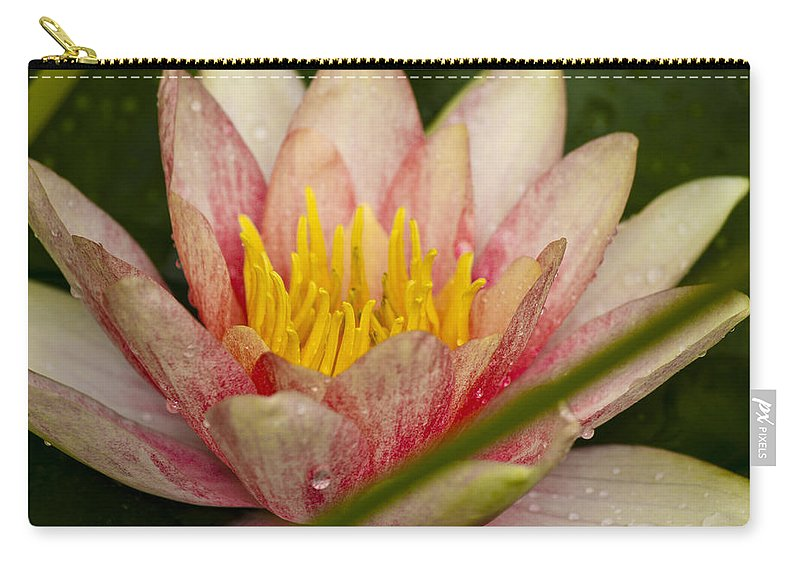 J Paul Getty Carry-all Pouch featuring the photograph Pink Water Lilly by Teresa Mucha