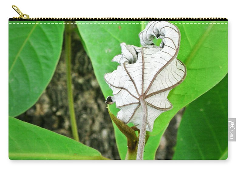 Plant Carry-all Pouch featuring the photograph Plant Artwork by Douglas Barnett