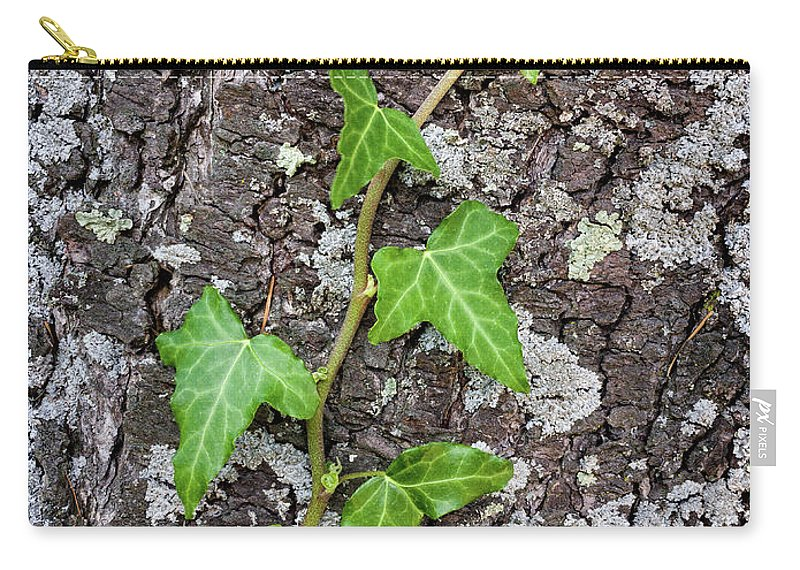 Background Carry-all Pouch featuring the photograph Plant by Paulo Goncalves