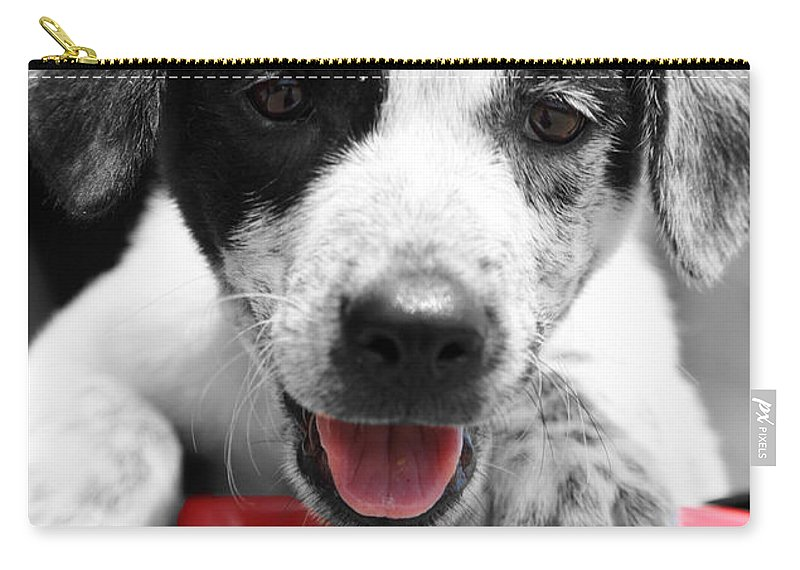 Puppy Carry-all Pouch featuring the photograph Playing by Amanda Barcon