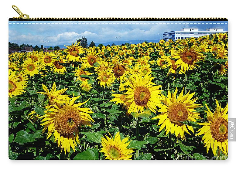 Sunflowers Carry-all Pouch featuring the photograph Pleasant Warmth by Jeff Barrett