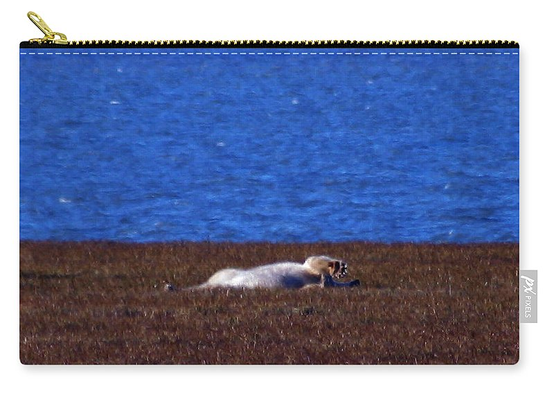 Polar Bear Carry-all Pouch featuring the photograph Polar Bear Rolling In Tundra Grass by Anthony Jones