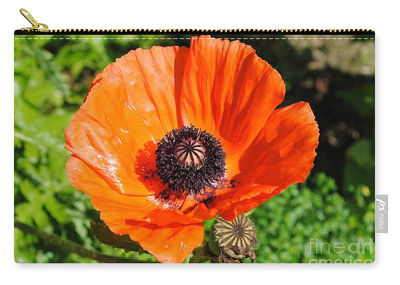 Poppy Carry-all Pouch featuring the photograph Poppy by Jost Houk