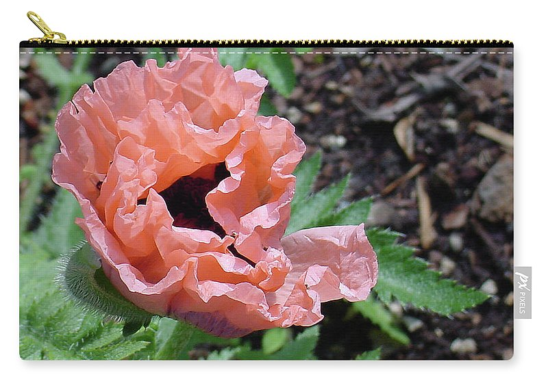 Center Carry-all Pouch featuring the photograph Poppy Opening by Shirley Heyn