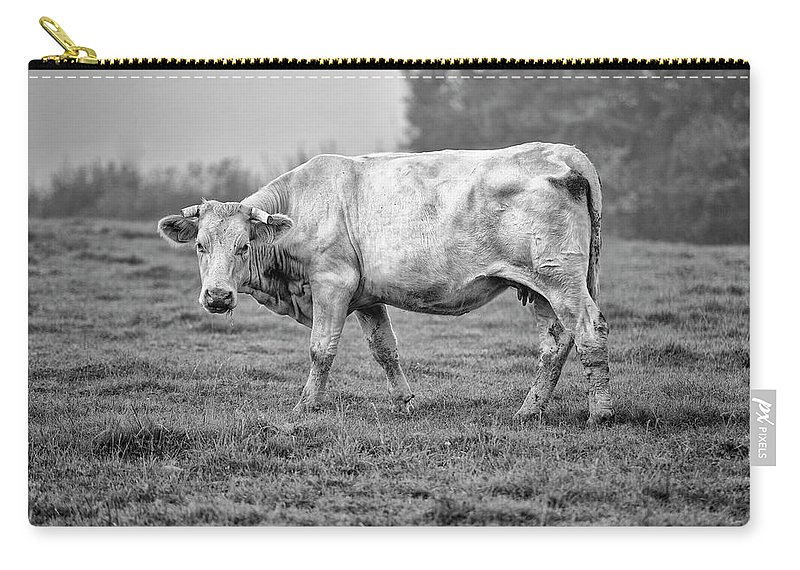 Charolais Carry-all Pouch featuring the photograph Portrait Of A Cow by Nailia Schwarz