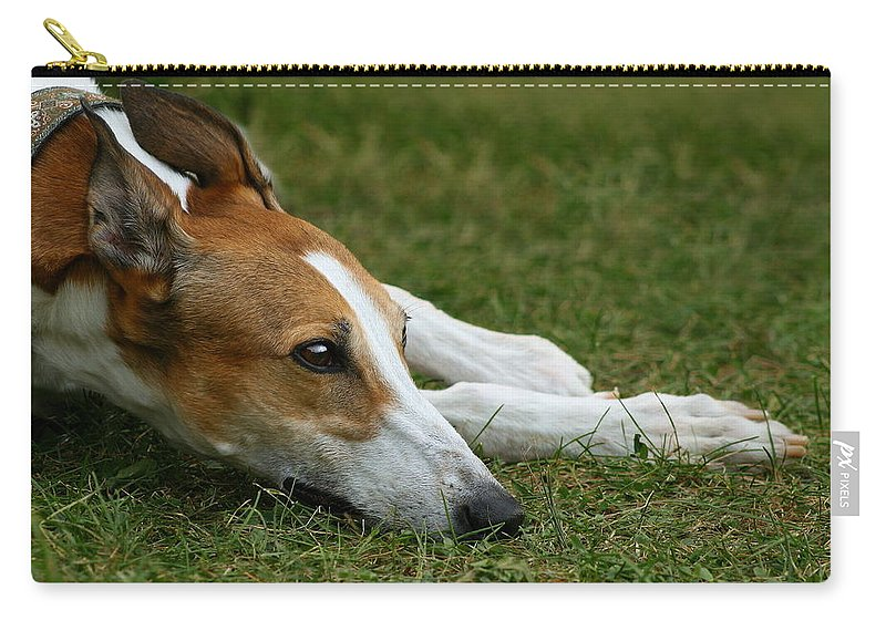 Editorial Carry-all Pouch featuring the photograph Portrait Of A Greyhound - Soulful by Angela Rath
