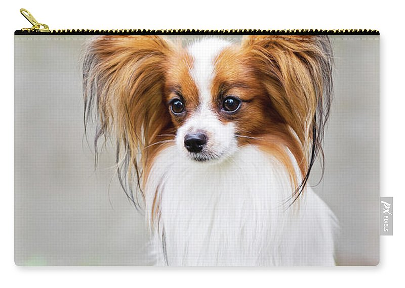 Portrait Of A Papillon Dog Carry All Pouch For Sale By Anna Maloverjan