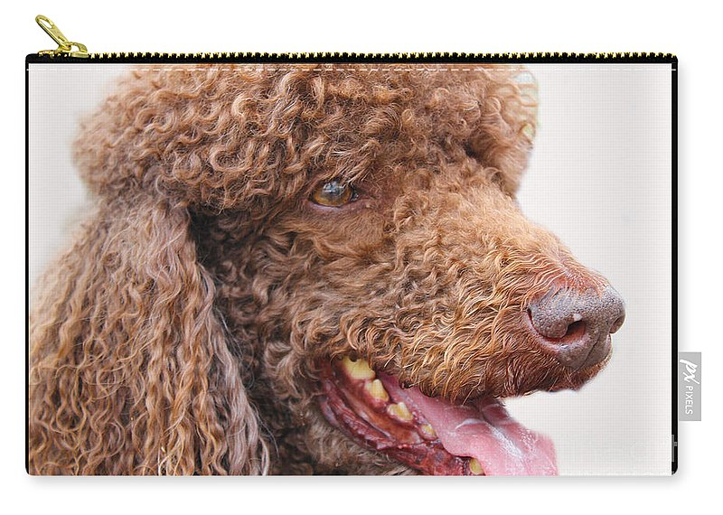 Dogs Carry-all Pouch featuring the photograph Portrait Of Guinness by Nina Silver