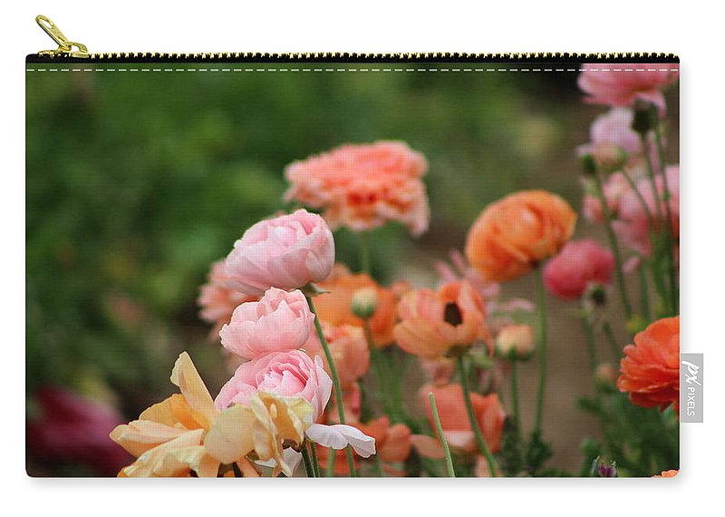 Powder Pink Ranunculus Carry-all Pouch featuring the photograph Powder Pink and Salmon Ranunculus by Colleen Cornelius