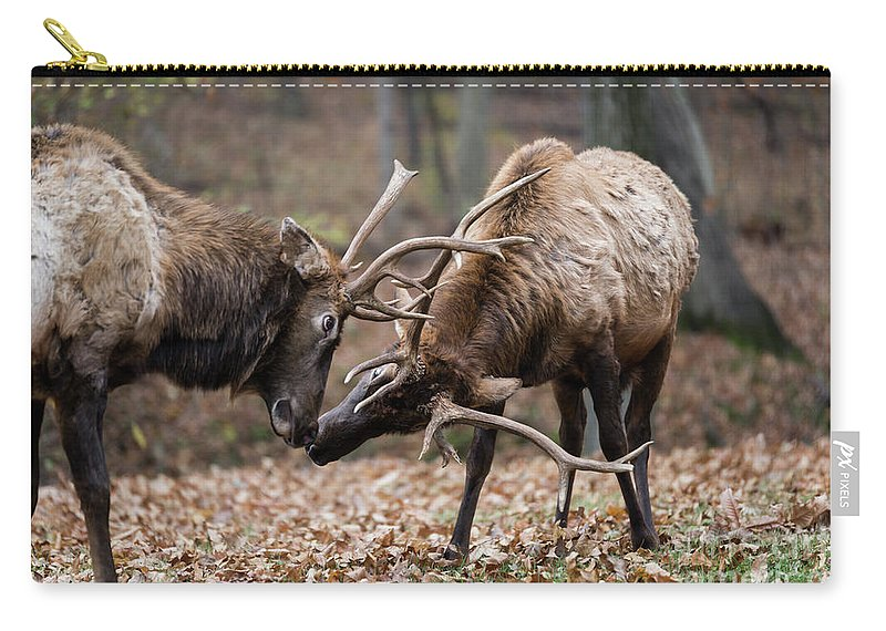 Elk Carry-all Pouch featuring the photograph Practicing by Andrea Silies