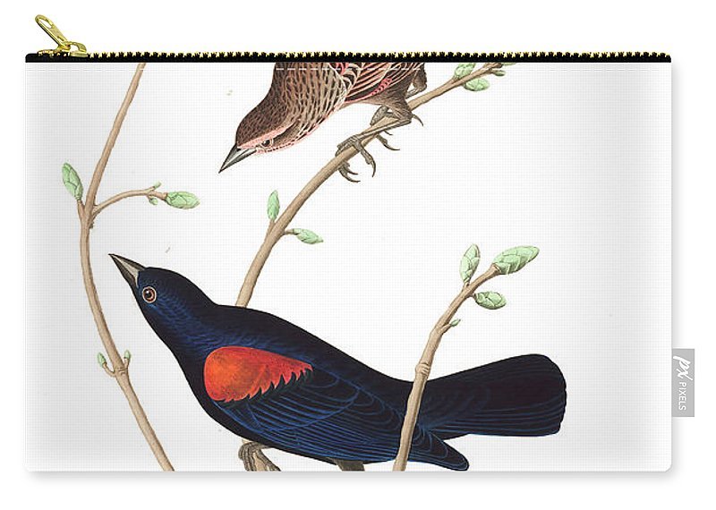 Prairie Starling Carry-all Pouch featuring the painting Prairie Starling by John James Audubon