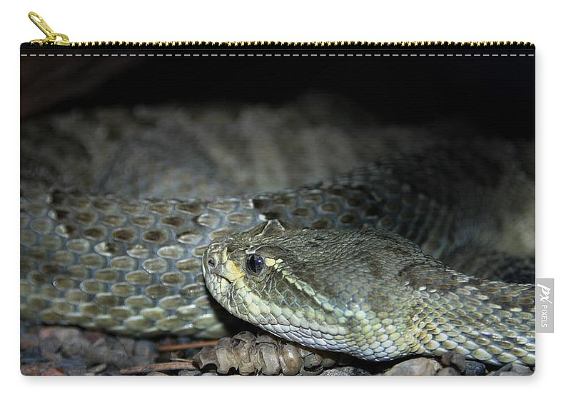 Snake Carry-all Pouch featuring the photograph Prarie Rattle Snake by Anthony Jones