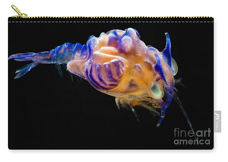 Plesiopenaeus Armatus Carry-all Pouch featuring the photograph Prawn Larva by Dant� Fenolio