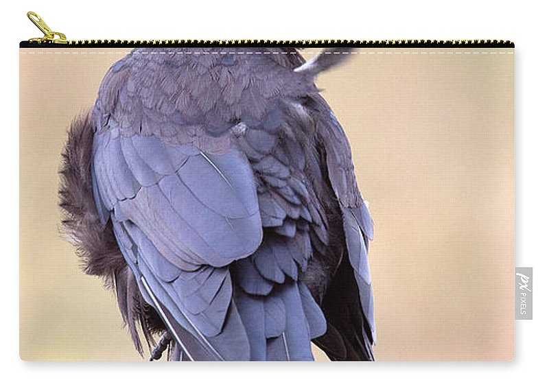 Crow Carry-all Pouch featuring the photograph Preening Crow by Bob Kemp