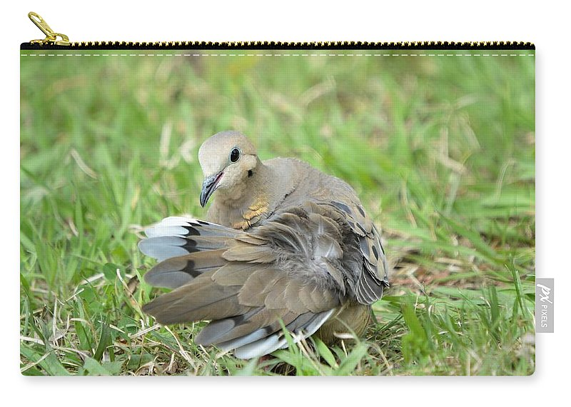 Bonfire Photography Carry-all Pouch featuring the photograph Preening Dove by Bonfire Photography
