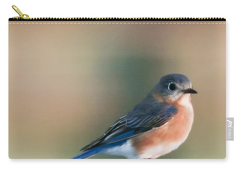 Bird Carry-all Pouch featuring the photograph Pretty In Blue by Phill Doherty
