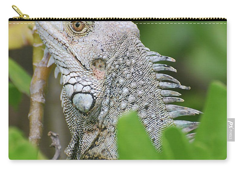 Iguana Carry-all Pouch featuring the photograph Profile Of A Gray Iguana Perched In A Bush by DejaVu Designs