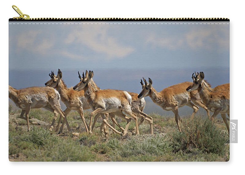 Pronghorn Carry-all Pouch featuring the photograph Pronghorn Antelope Running by Heather Coen