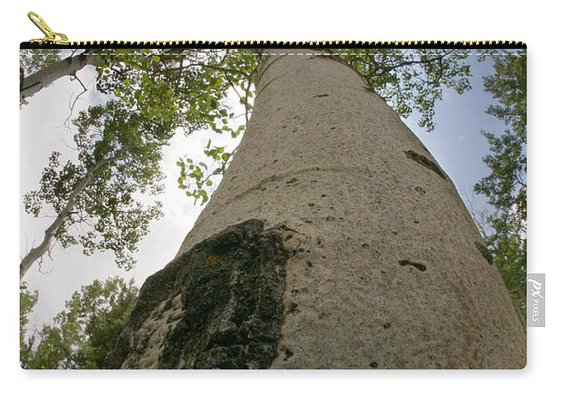 Nature Carry-all Pouch featuring the photograph Proud Aspen by Jeffery Ball
