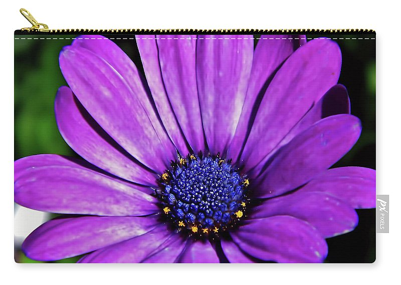 Daisy Carry-all Pouch featuring the photograph Purple African Daisy by D Hackett