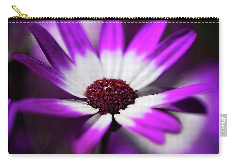 Daisy Carry-all Pouch featuring the photograph Purple And White Daisy by Saija Lehtonen
