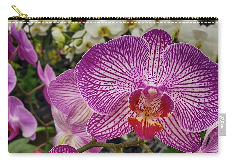 Purple White Orchid Beautiful Flower Fauna Nature Plant Macro Don Columbus Photography Naples Florida Carry-all Pouch featuring the photograph Purple And White Orchid by Don Columbus