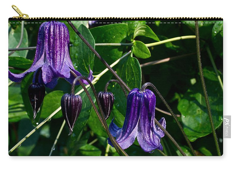 Clamatis Carry-all Pouch featuring the photograph Purple Clamatis Bells by Douglas Barnett